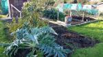 Markyate Allotment