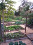 Just One Backyard