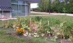 Oakton Community College Garden