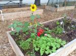 clearwater community gardens
