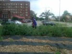 Residents pick food for Arise Detroit at Herman Keifer Garden