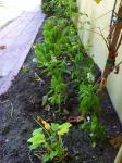 toni's small garden