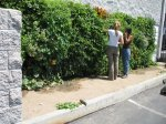 Los Angeles-Urban Farming Food Chain Edible Wall-L.A.Regional Food Bank