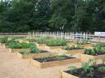 Winterville Community Garden